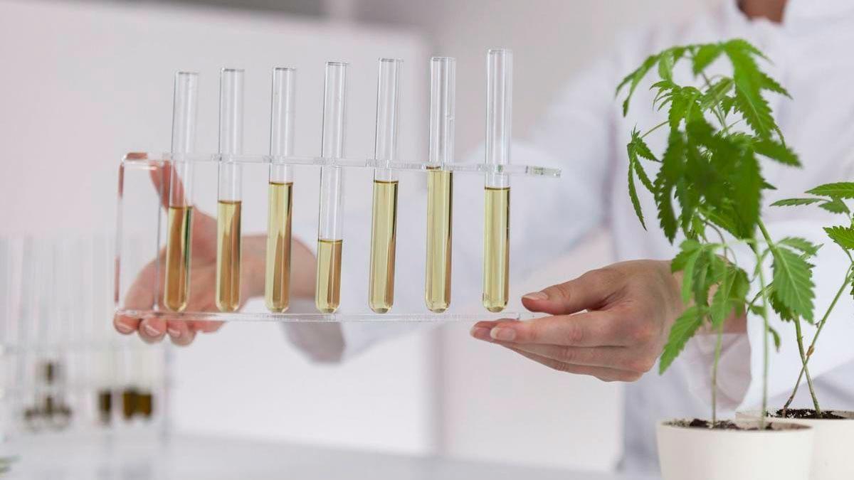 CBD oil inside glass tubes in a hemp research lab