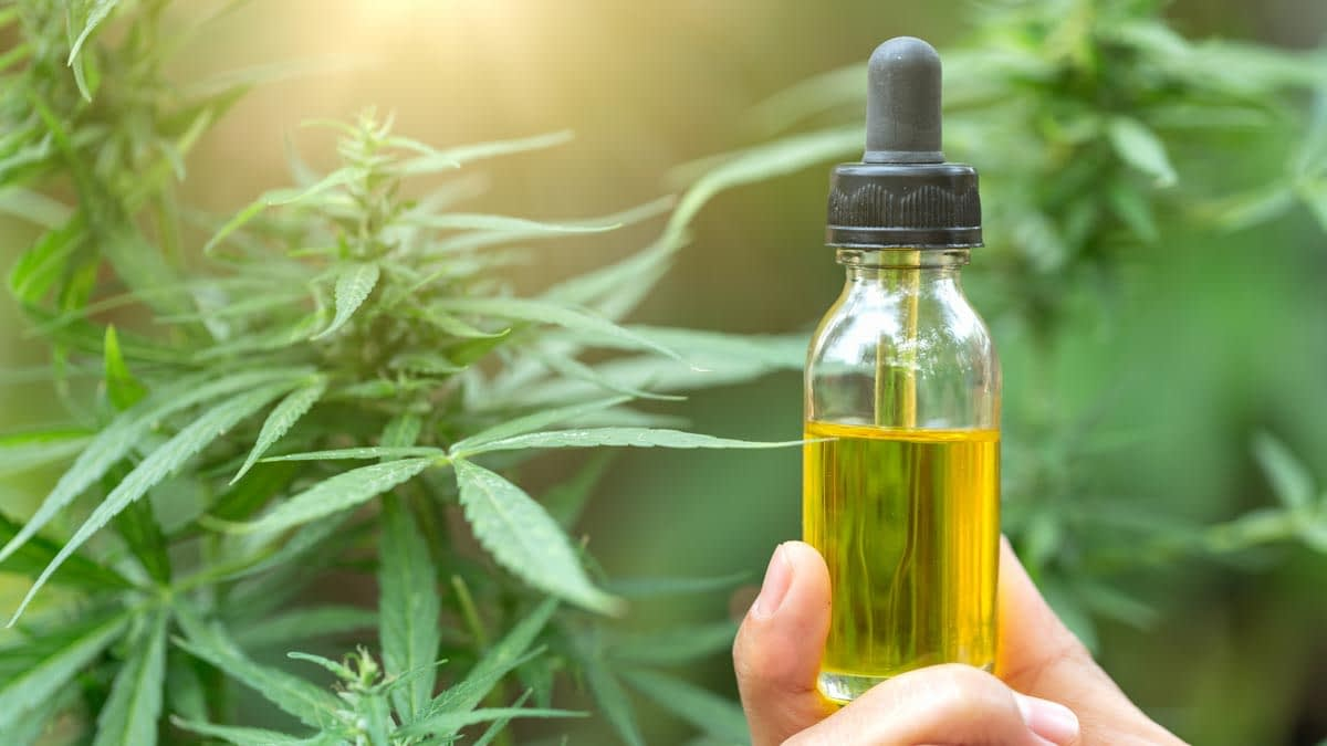 Person holding a CBD oil bottle in their hand in a hemp farm